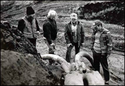 mammoth skull discovery