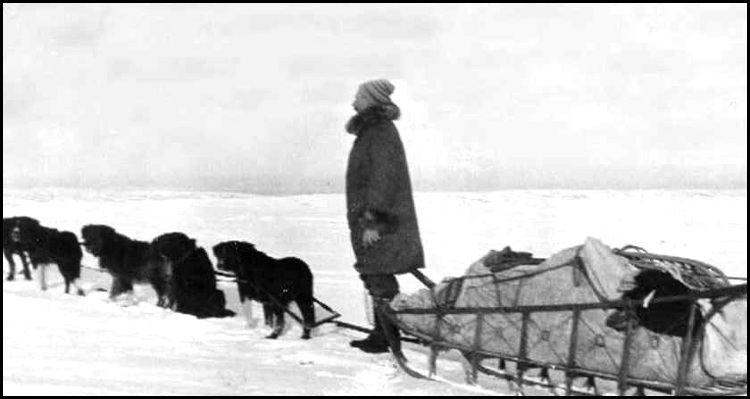 Quigley with sled and dog team